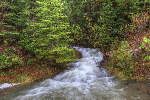 Banff Spring Creek Flow Print by Sam Amato