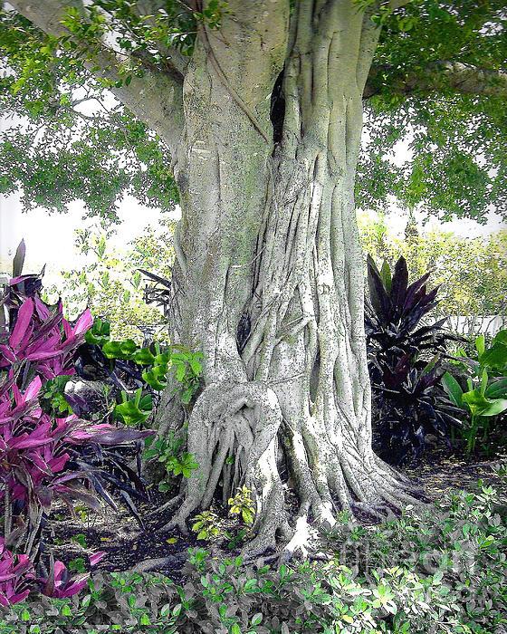 Banyon Tree Trunk Print by Merton Allen