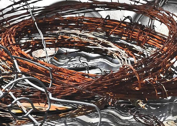 Barbed Print by Teresa Dixon