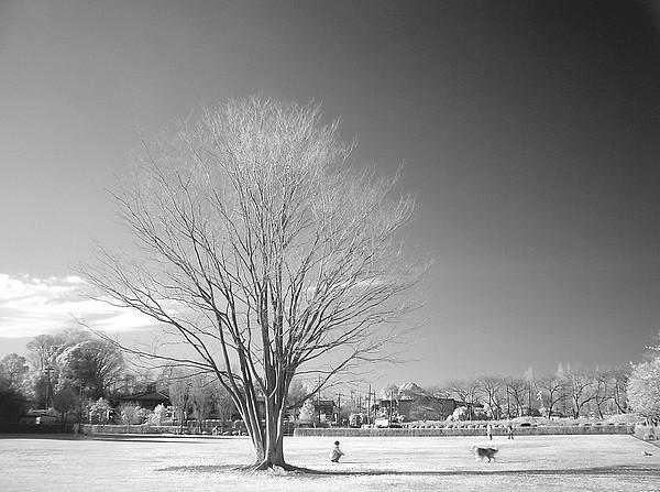 Bare Frozen Tree In Winter Print by Yaplan