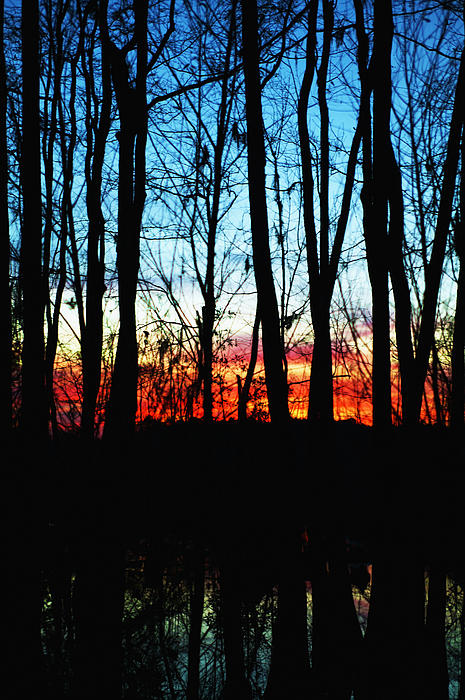 Bare Trees At Sunset 2 Print by Skip Nall