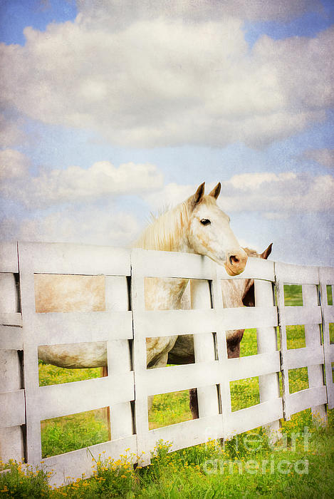 Barn Yard Dreamer Print by Darren Fisher