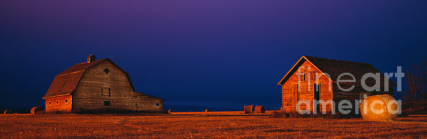 Barns At Night Print by David Nunuk
