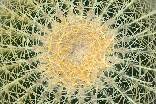 Rick Mutaw - Barrel Cactus