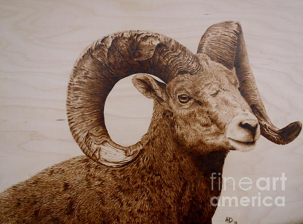 Adam Owen - Battle Scarred Big Horn Ram