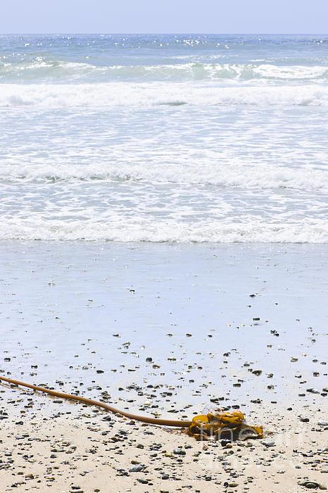 Beach Detail On Pacific Ocean Coast Print by Elena Elisseeva