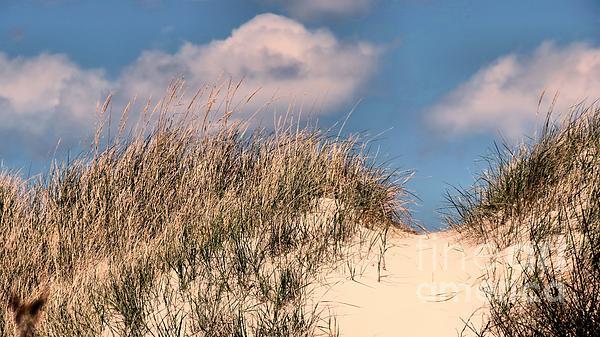 Janice Drew - Beach Dunes