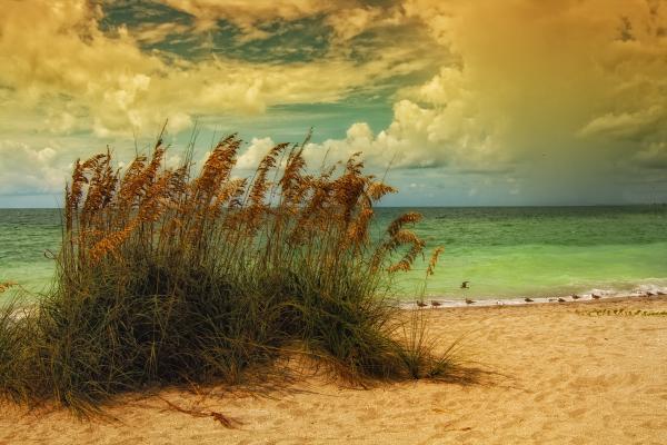 Beach Grass Print by Gina Cormier