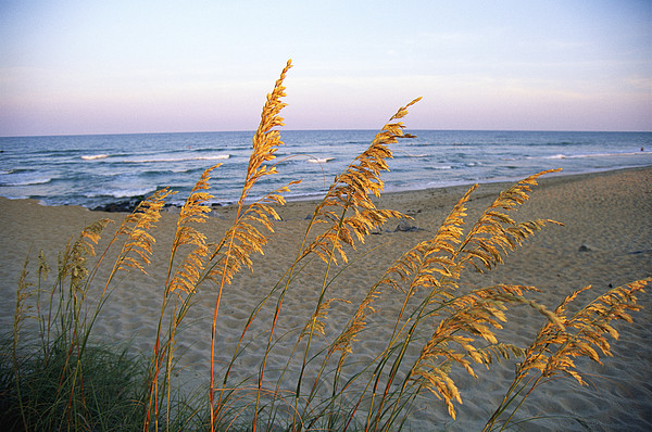 Beach Scene With Sea Oats Print by Steve Winter