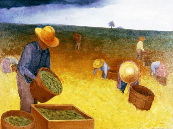 Clotilde Espinosa - Bean Harvest