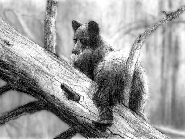 Bear Bottom Print by Paul Sachtleben