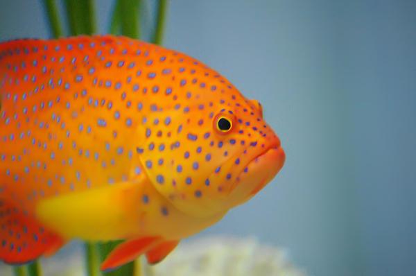 Beautiful Fish Print by Michael Krahl