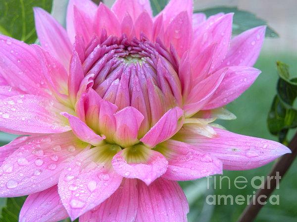 Beautiful Flower In Daybreak Print by Christine Belt