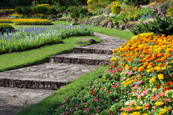 Beautiful Flowers In Park Print by Atiketta Sangasaeng