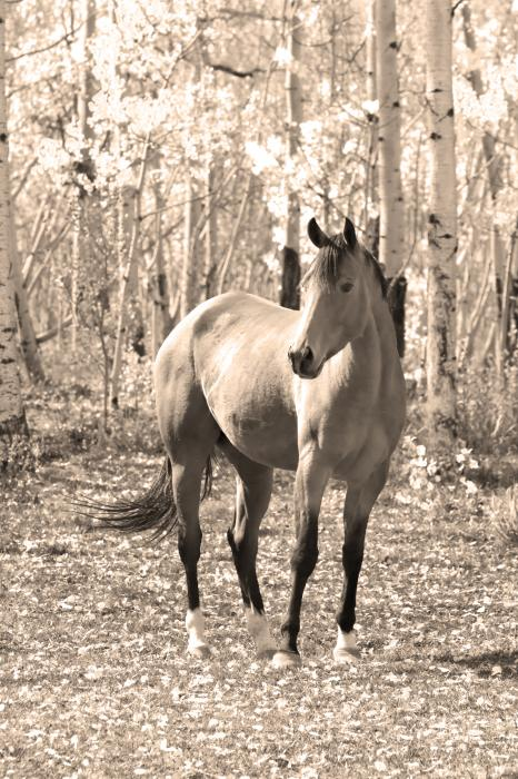 Beautiful Horse In Sepia Print by James BO  Insogna