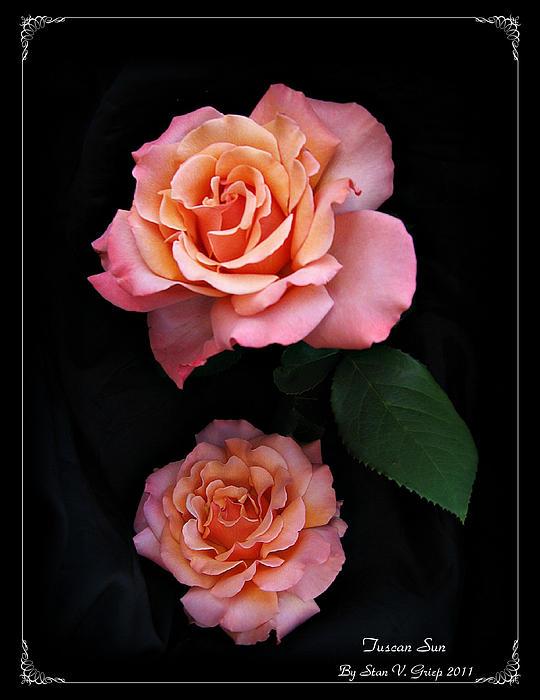Stan Griep - Beauty In Bloom
