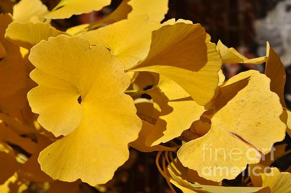 Beauty In The Leaves Print by Denise Ellis