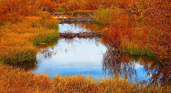 Terril Heilman - Beaver Ponds