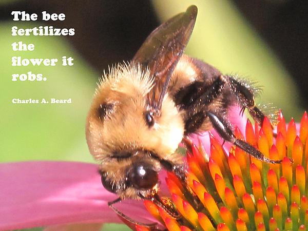 Bee Exchange Print by Ian  MacDonald