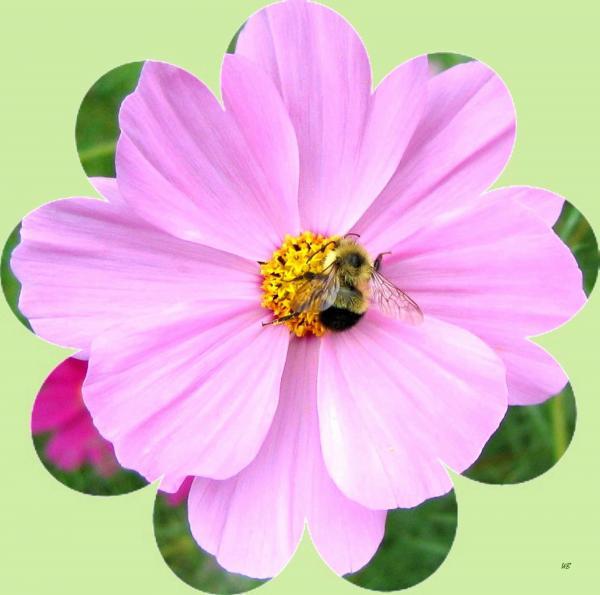 Will Borden - Bee-Line 1