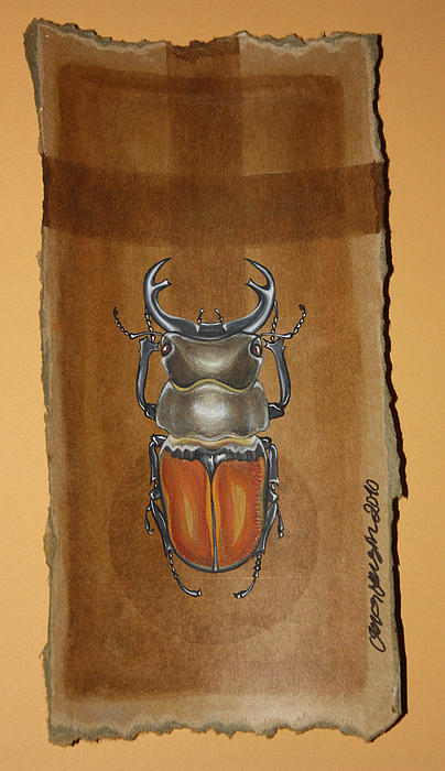 Beetle II Mixed Media
