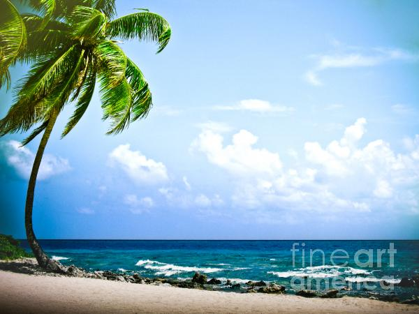 Belize Private Island Beach Print by Ryan Kelly
