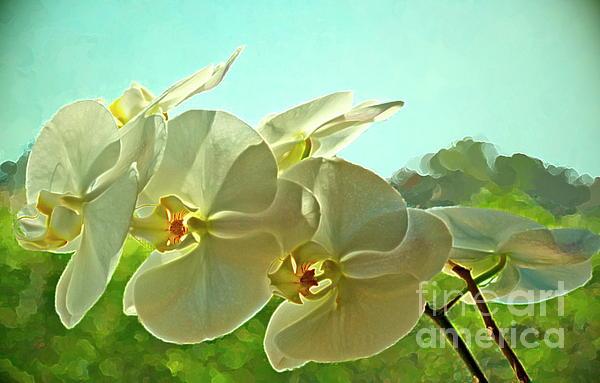 Belleza Blanca Print by Gwyn Newcombe