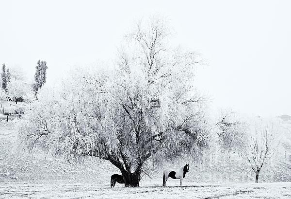 Beneath A Frosty Canopy Print by Mike  Dawson