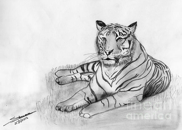 Bengal Tiger Print by Shashi Kumar