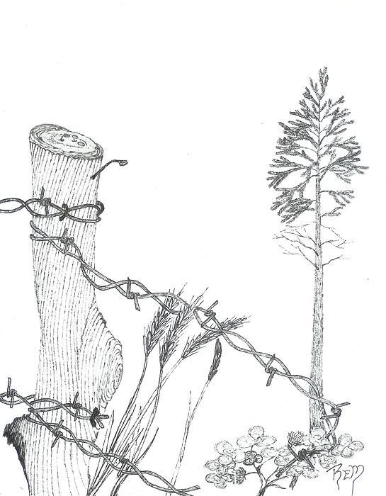 Beyond The Broken Fence - Sketch Print by Robert Meszaros