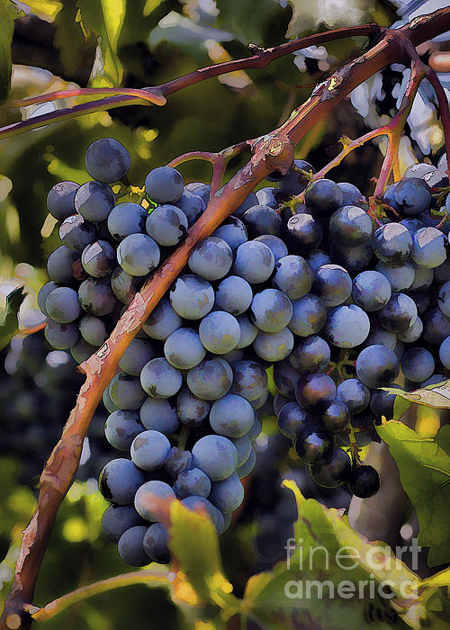 Big Bunch Of Grapes Print by Michael Flood