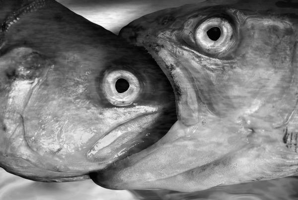 Big Fish Eat Small Fish Print by Michal Boubin
