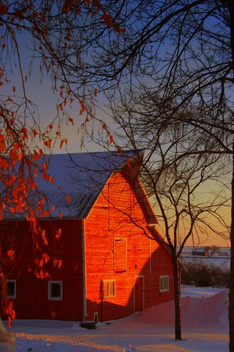 Big Red Barn Print by Julie Lueders