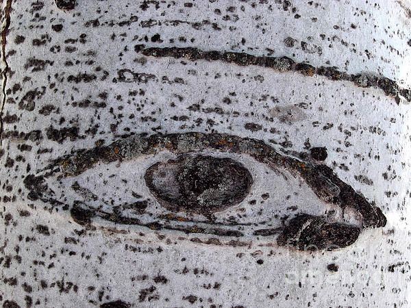 Birch Bark All-seeing Eye Print by Janeen Wassink Searles