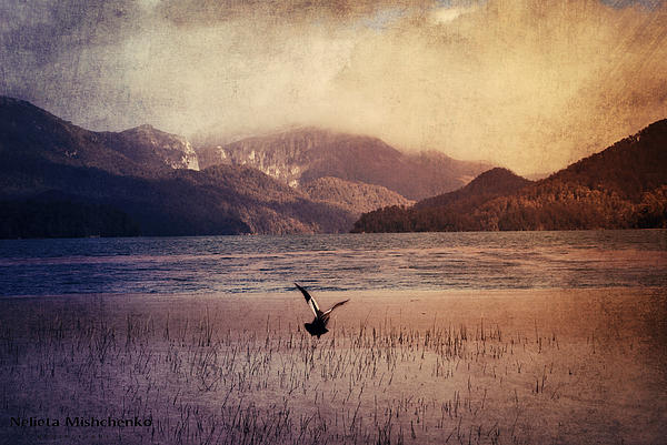 Bird In Flight Print by Nelieta Mishchenko