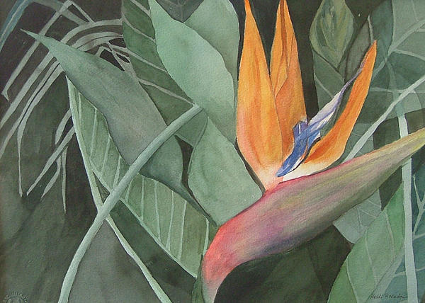 Bird Of Paradise Print by Heidi Patricio-Nadon