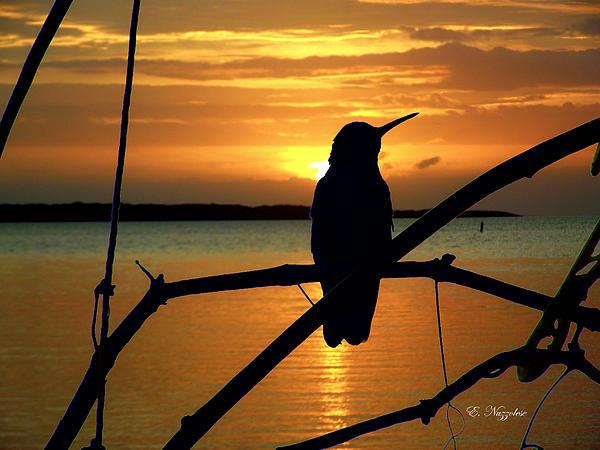 Elizabeth Nuzzolese - Bird Silhouette At Tavernier