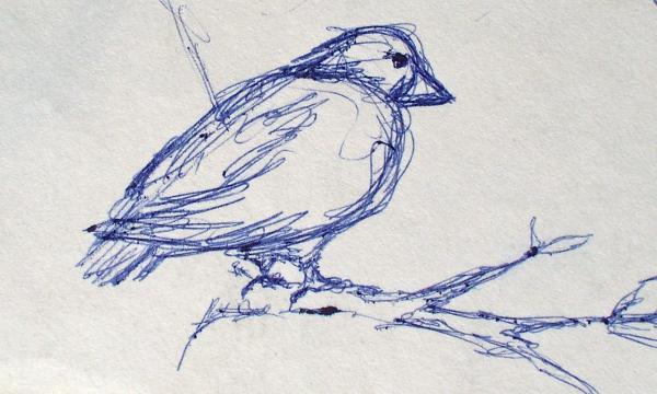 Bird sketch print by jennifer addington