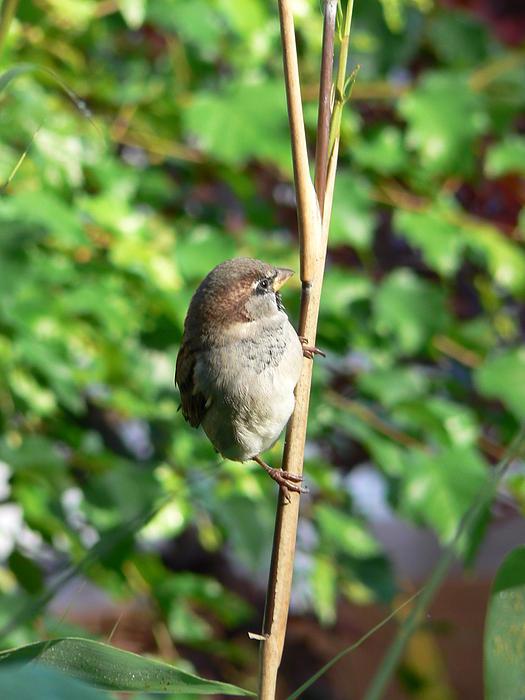 Barbara St Jean - Birdie Birdie