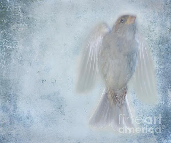 Birdness Print by Jim Wright