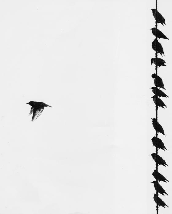 Jim Wright - Birds on a wire