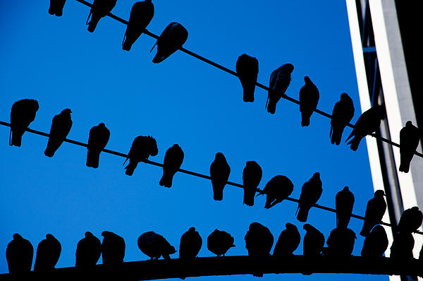 Karol  Livote - Birds on a Wire