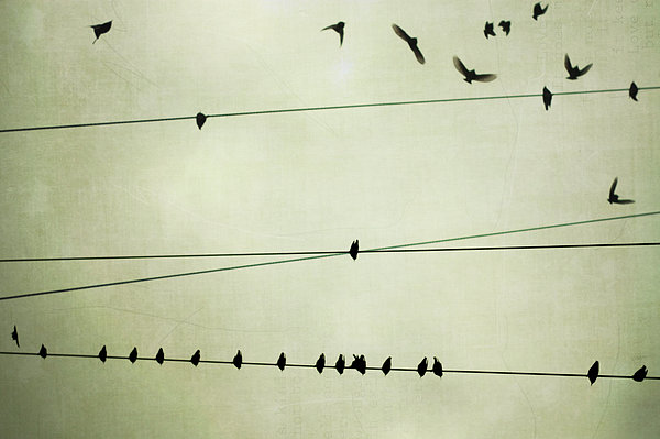 Birds On Telephone Wire Print by Lucy Loomis, Photographer