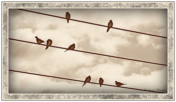Birds On Wires Print by Susan Kinney
