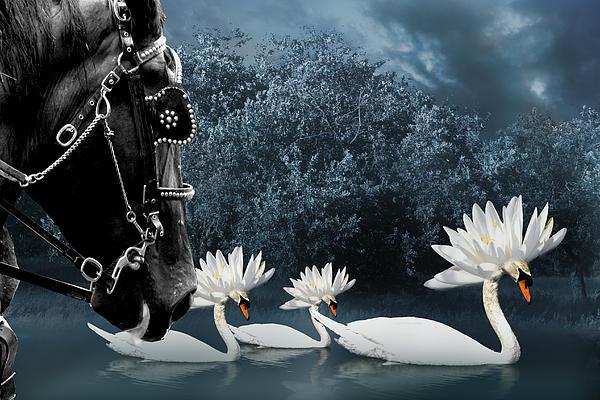 Birds-tribal Swans Print by Trevor Slauenwhite
