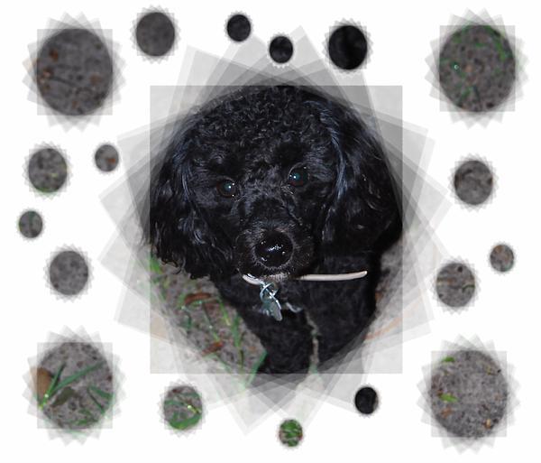 Judy Hall-Folde - Black as Coal