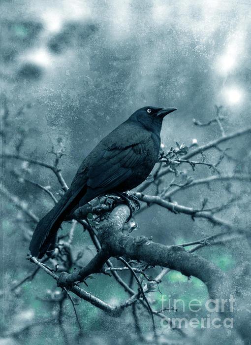 Black Bird On Branch Print by Jill Battaglia