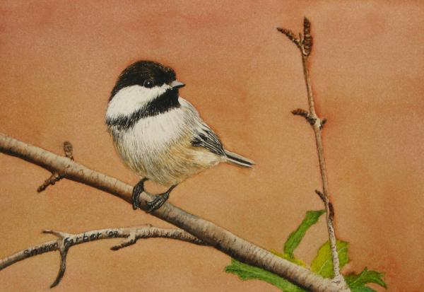 Sharon Farber - Black Capped Chickadee