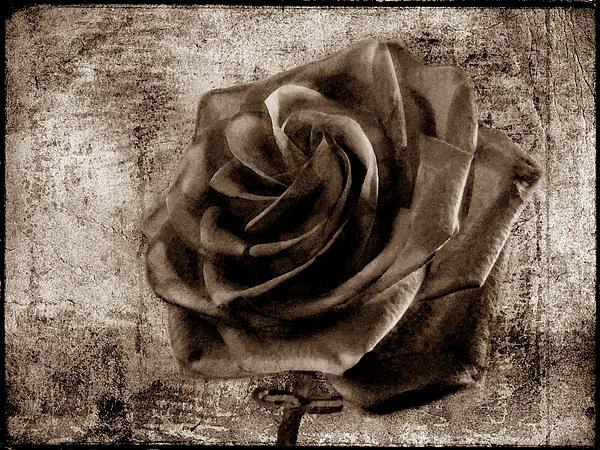 David Dehner - Black Rose Eternal  S