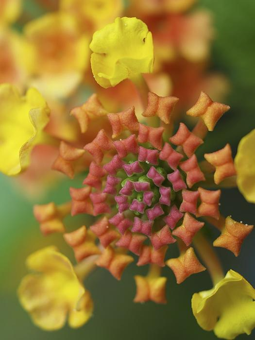 Blooming Art Print by Patricia McKay